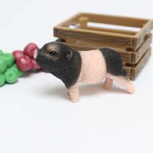 Miniature Pig with Apples